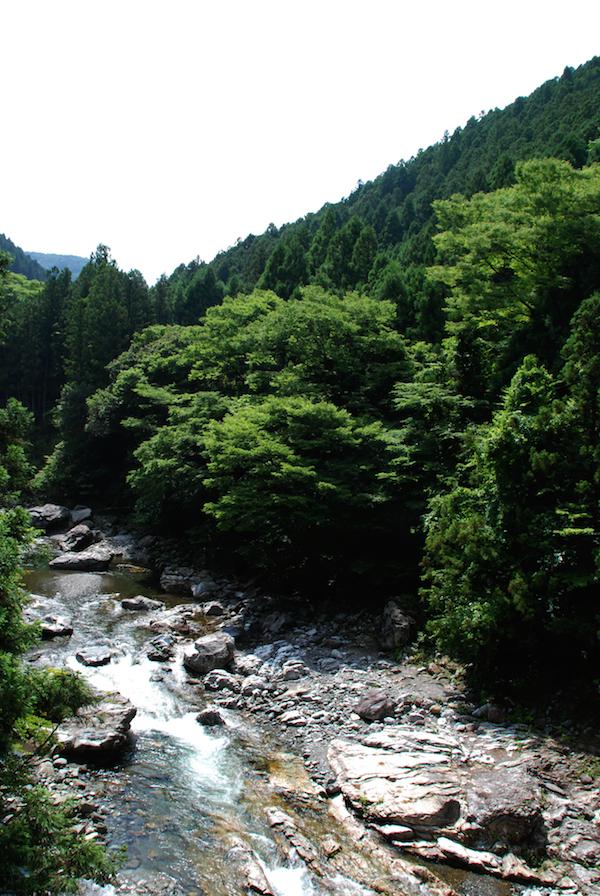 松葉エキス 松の産地 川端の松葉エキス